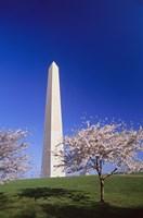 Arlington Cemetery in Spring Fine Art Print
