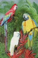 3 Parrots Fine Art Print