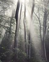 Woodland Sun Fine Art Print