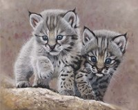 Bobcat Babies Fine Art Print