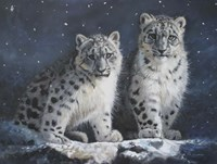 Young Snow Leopards Into the Dark Fine Art Print