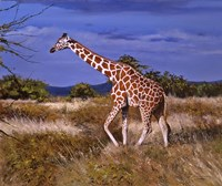 Reticulated Giraffe Fine Art Print