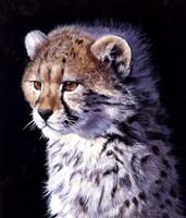 Cheetah Cub Fine Art Print