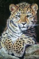 Amur Leopard Cub 2 Fine Art Print