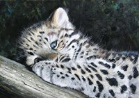Amur Leopard Cub Fine Art Print