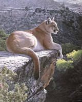 Cougar Country Fine Art Print