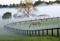 Horses in the Mist #3, Kentucky 08 Fine Art Print