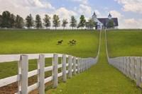 Manchester Farm, Kentucky 08 Fine Art Print