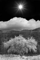 Cottonwood & Sunbeams, Canyon de Chelly, Arizona 10 Fine Art Print