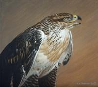 Ferruginous Hawk Fine Art Print