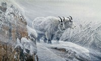 Winter's Fury Mountain Goat Fine Art Print