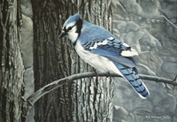 Backyard Jay Fine Art Print