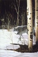 Grey Wolf & Aspen Fine Art Print