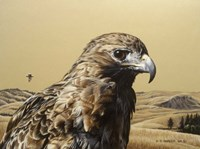 Red Tailed Hawk 2 Fine Art Print