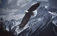 Wings Over Winter Fine Art Print