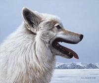 Arctic Wolf Portrait Fine Art Print