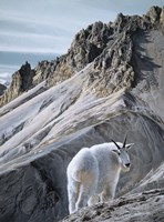 Ramparts- Mountain Goats Fine Art Print
