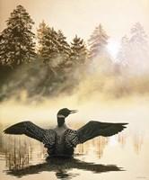 Misty Dawn - Loon Fine Art Print