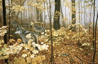 Autumn Maples - Wolves Fine Art Print