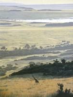 Morning On The Mara Fine Art Print
