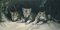 Three Little Wolves Fine Art Print