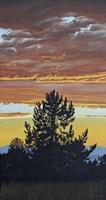 Evening Pine Fine Art Print