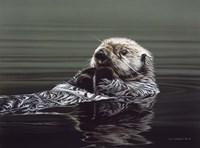 Just Resting - Sea Otter Fine Art Print