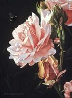 Rose And Bumblebee Fine Art Print