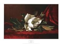 Magnolia Flower Fine Art Print
