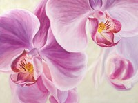 Purple Orchids Fine Art Print