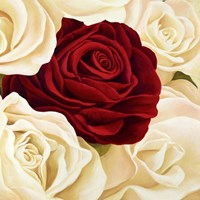 Rose Composition (Detail) Fine Art Print