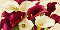 Calla Composition Fine Art Print