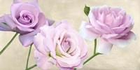 Rose Classiche Fine Art Print