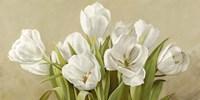 Tulipani Bianchi Fine Art Print