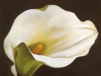 Calla Fine Art Print