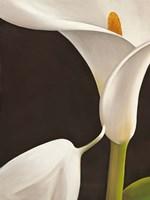 Calla Moderna I Fine Art Print