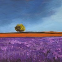 Field of Lavender (Detail) Fine Art Print