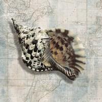 Sea Shell Fine Art Print