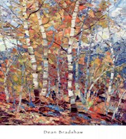 Birch Colors 1 Fine Art Print