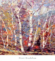 Birch Colors 2 Fine Art Print