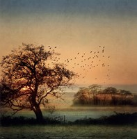 Good By Day Birds Fine Art Print