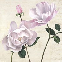 Classica II Fine Art Print