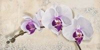 Royal Orchid Fine Art Print