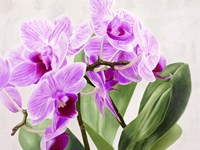 Orchidee Selvagge Fine Art Print