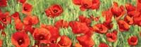 Poppy Field (Detail) Fine Art Print