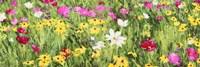 Field of Flowers (Detail) Fine Art Print