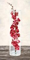 Arrangement of Orchids Fine Art Print
