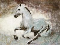 White Star Fine Art Print