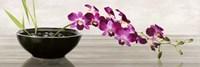 Orchid Arrangement Fine Art Print