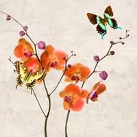 Orchids & Butterflies I Fine Art Print